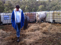 After her awareness expansion, Donna was able to be in the very small yard without causing nervousness in the foal.