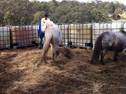 Donna & foal 4