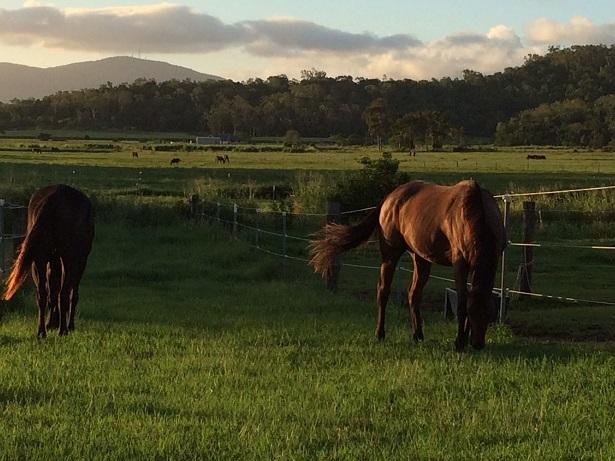 Karen Ashmans horses websized