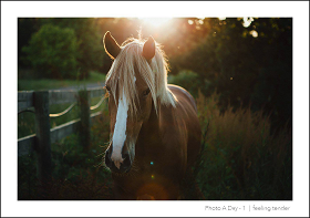 marie-horse-front-in-dawn-websized